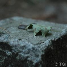 Stilleben auf einem Stein